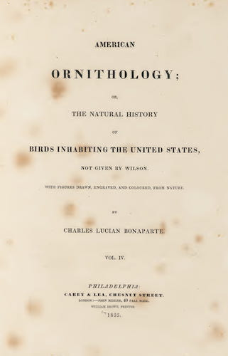 Aquatint & Lithography - American Ornithology Vol. 4