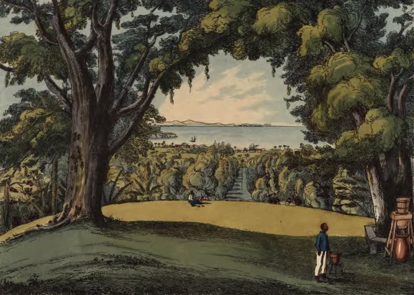 An Account of the Botanic Garden in the Island of St. Vincent - View of the Botanic Garden, St. Vincent, taken from the Superintendent's House (1825)