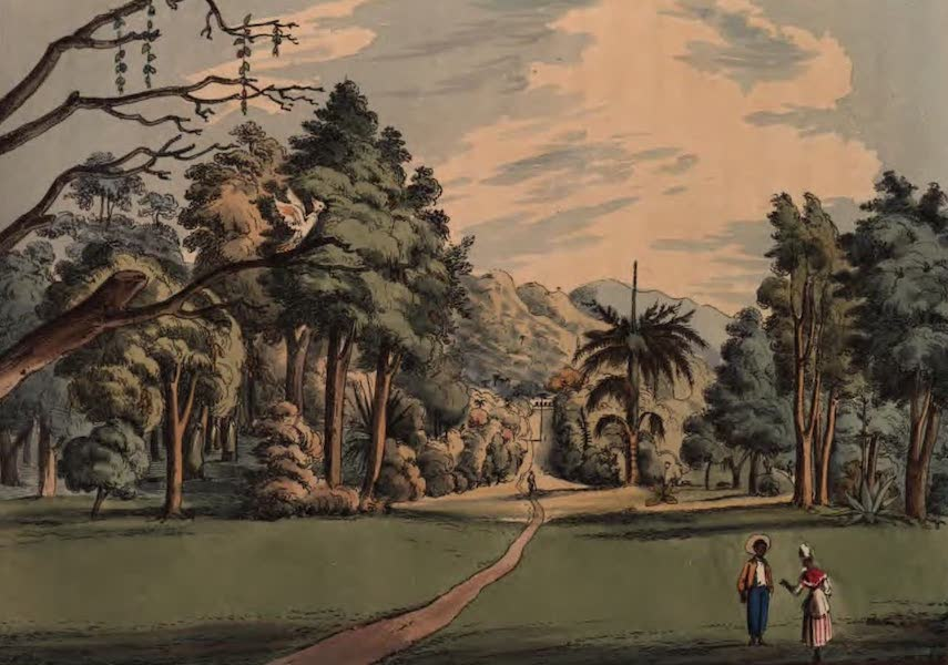 An Account of the Botanic Garden in the Island of St. Vincent - Botanic Garden from the bottom of the Central Walk (1825)