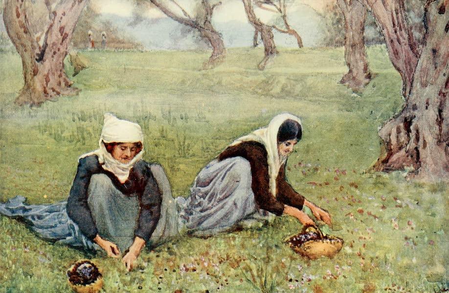An Artist in Corfu - Olive Pickers (1911)