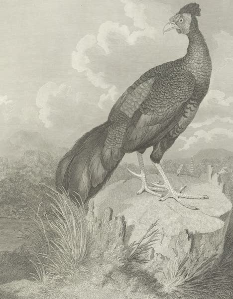 An Authentic Account of an Embassy from the King of Great Britain to the Emperor of China [Vol. 3: Plates] - The fire-backed pheasant of Java (1797)
