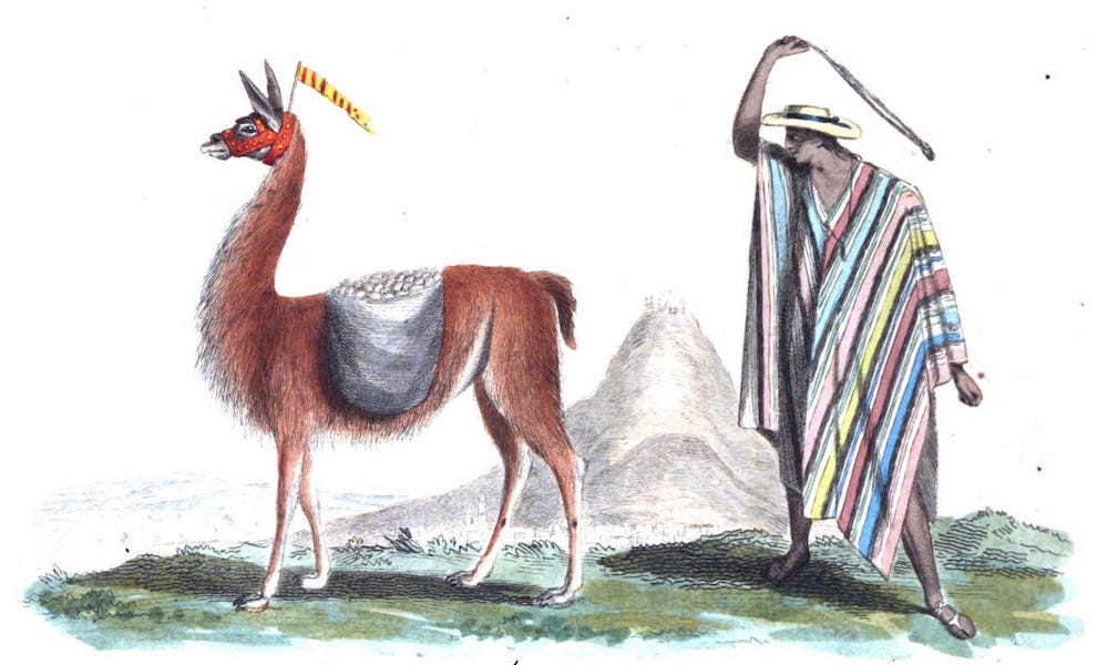 An Historical and Descriptive Account of the Peruvian Sheep - Llama Puntera and Llamero in his Poncho (1811)