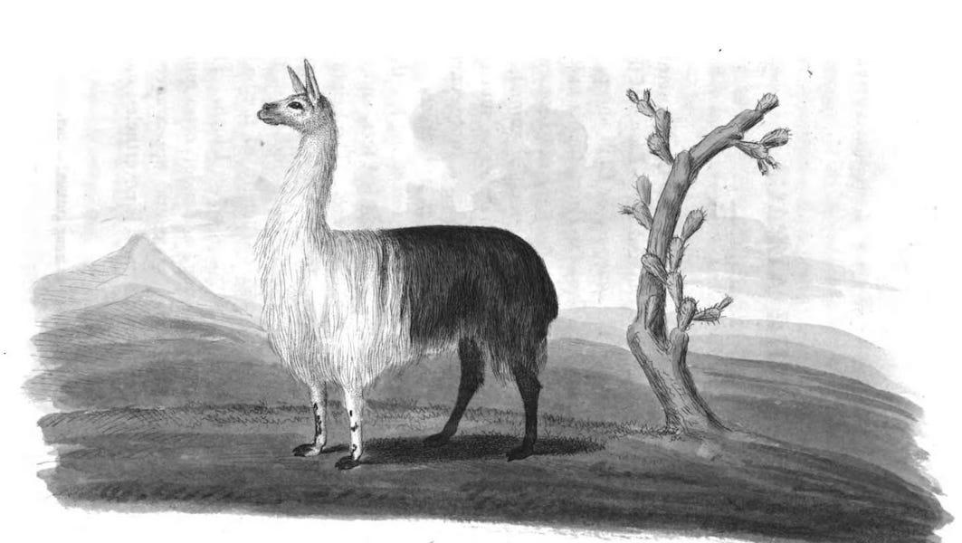 An Historical and Descriptive Account of the Peruvian Sheep - Alpaca (1811)