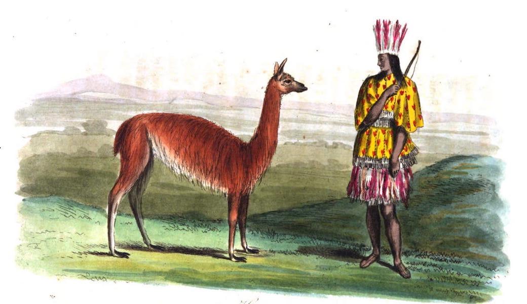 An Historical and Descriptive Account of the Peruvian Sheep - Huanaco (1811)