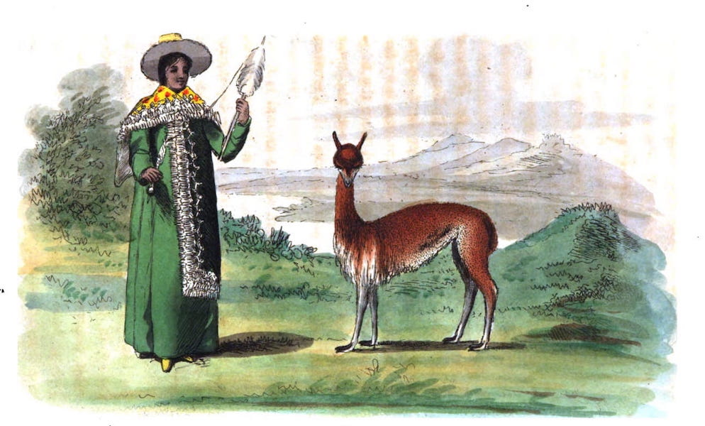 An Historical and Descriptive Account of the Peruvian Sheep - Vicuña (1811)