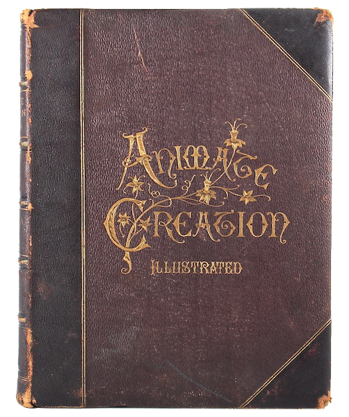 Animate Creation Vol. 1 - Front Cover (1885)