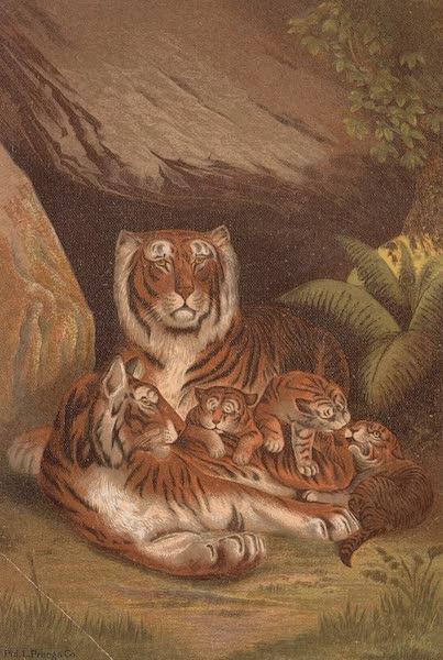 Animate Creation Vol. 1 - Tiger (1885)