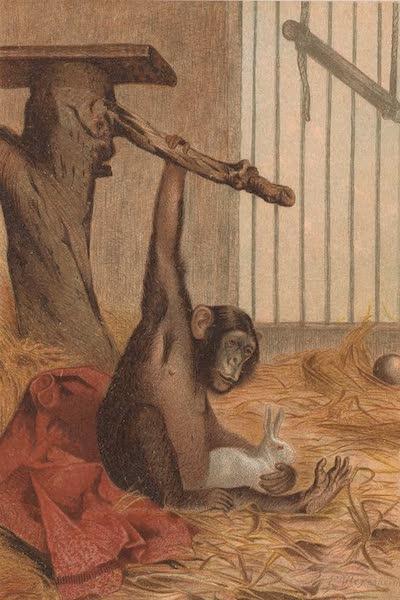 Animate Creation Vol. 1 - Chimpanzee (1885)