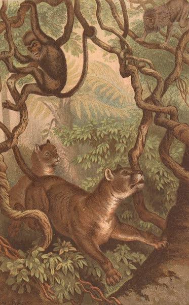 Animate Creation Vol. 1 - Puma (1885)
