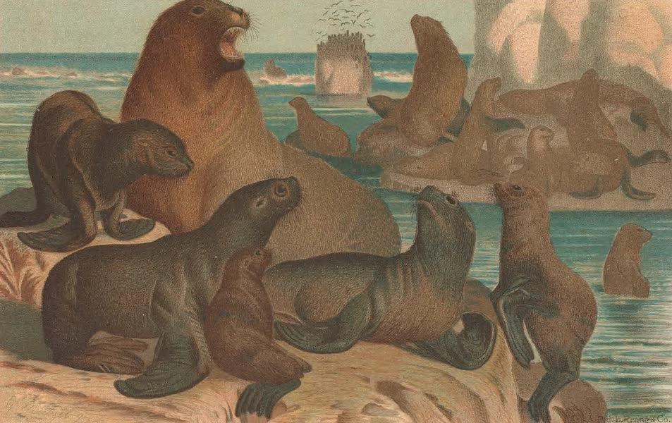 Animate Creation Vol. 1 - Sea Lion (1885)
