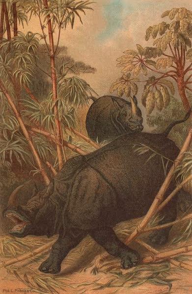 Animate Creation Vol. 1 - Rhinoceros (1885)