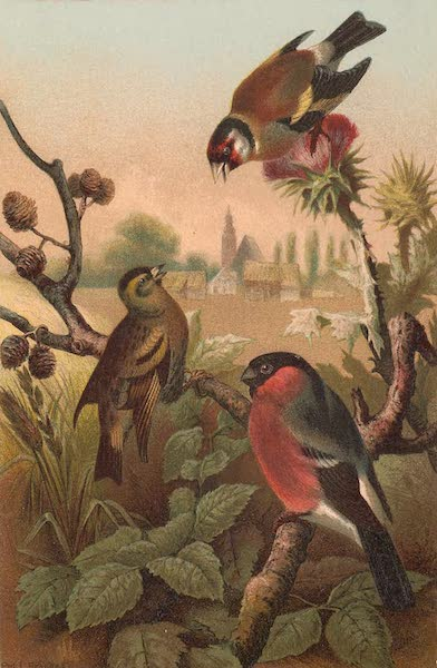 Animate Creation Vol. 2 - Group of Finches (1885)