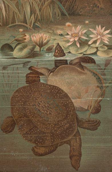 Animate Creation Vol. 3 - Soft Turtle (1885)
