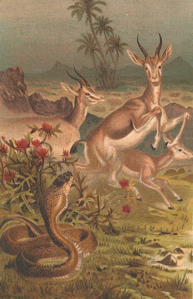 Animate Creation Vol. 3 - African Cobra or Haje and Gazelles (1885)