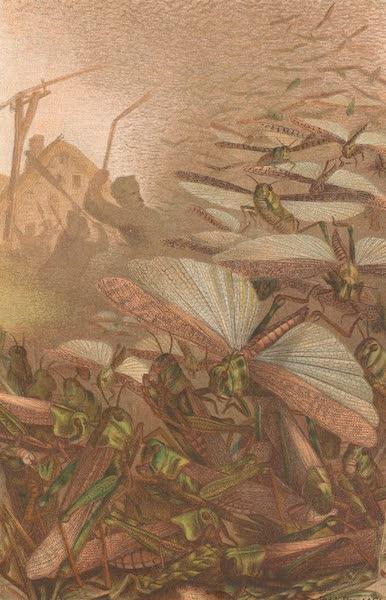 Animate Creation Vol. 3 - Swarm of Migratory Locusts (1885)
