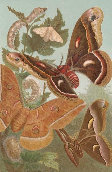 Animate Creation Vol. 3 - Silk Work and Moths (1885)