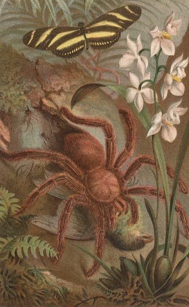 Animate Creation Vol. 3 - Crab Spider or Matoudou (1885)