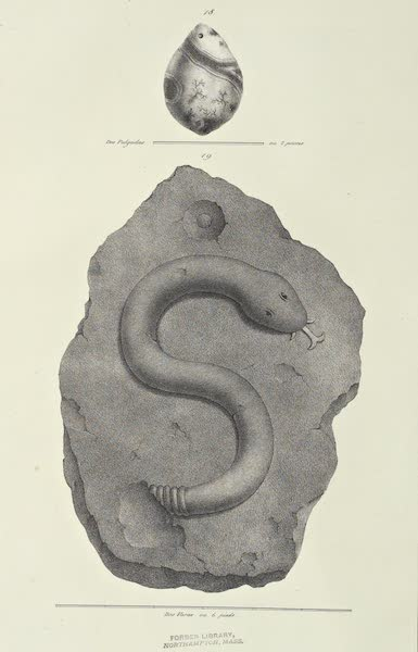 Antiquites Mexicaines - 1er Expedition - Planche XVII (1844)
