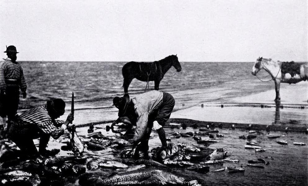 Argentina, Past and Present - A Haul of Fish on the La Plata River (1914)
