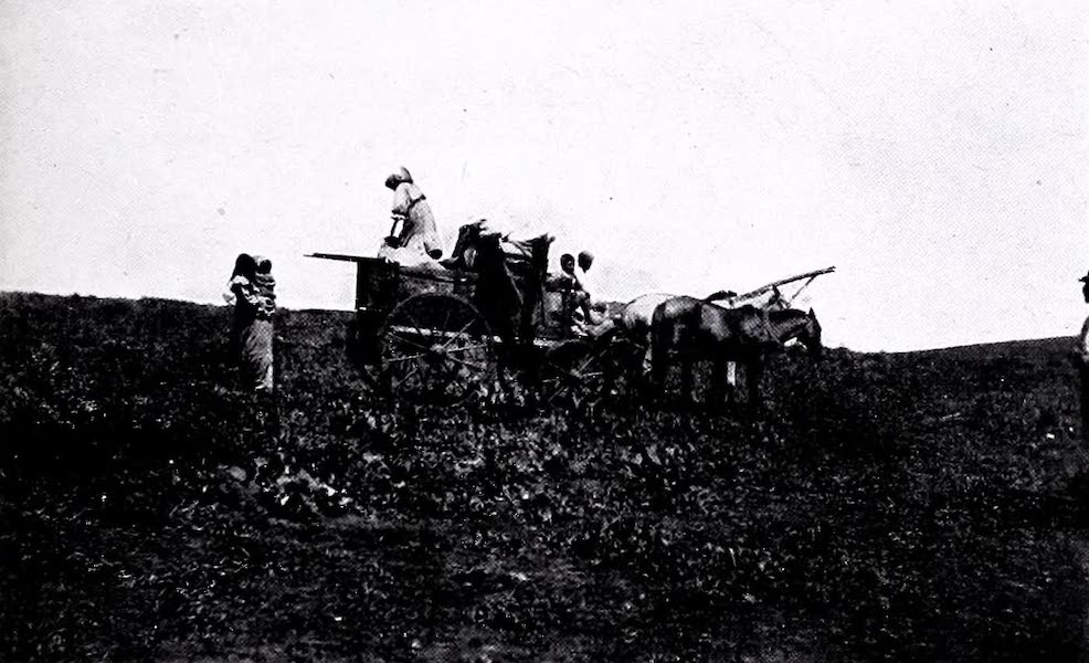 Argentina, Past and Present - Carting in Misiones (1914)