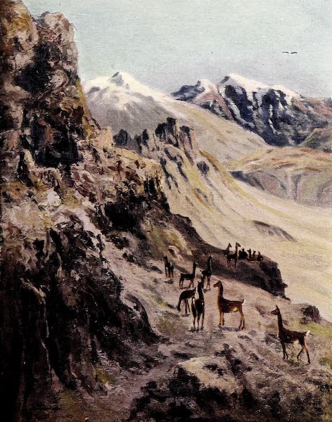 Argentina, Past and Present - A Guanaco Hunt (1914)
