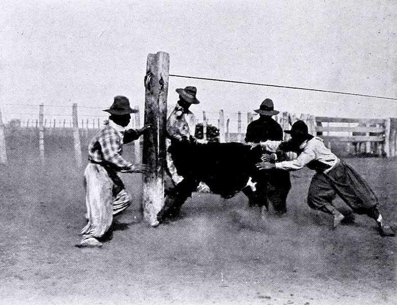 Argentina, Past and Present - Cattle Watering (1914)