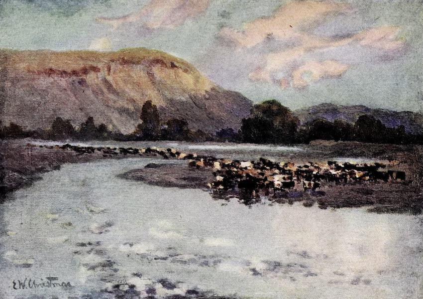 Argentina, Past and Present - Branding Cattle : III (1914)