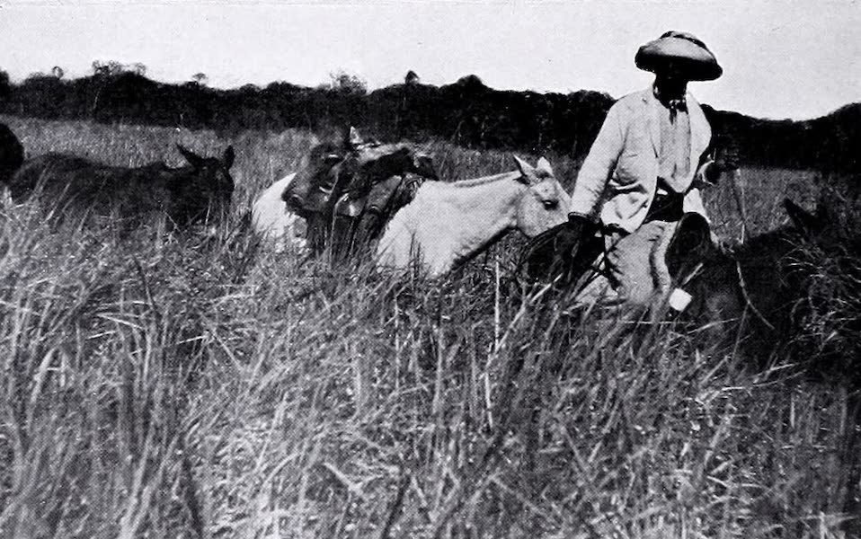 Argentina, Past and Present - Indian Girls Driving Home Their Goat Herds (1914)