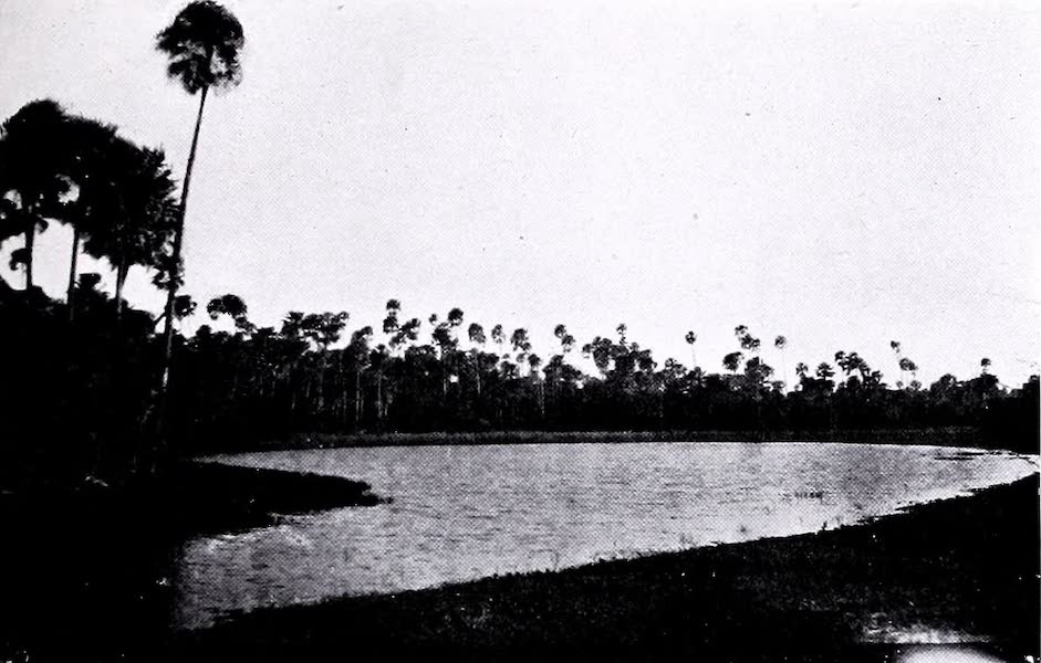 Argentina, Past and Present - A Chaco Lagoon (1914)