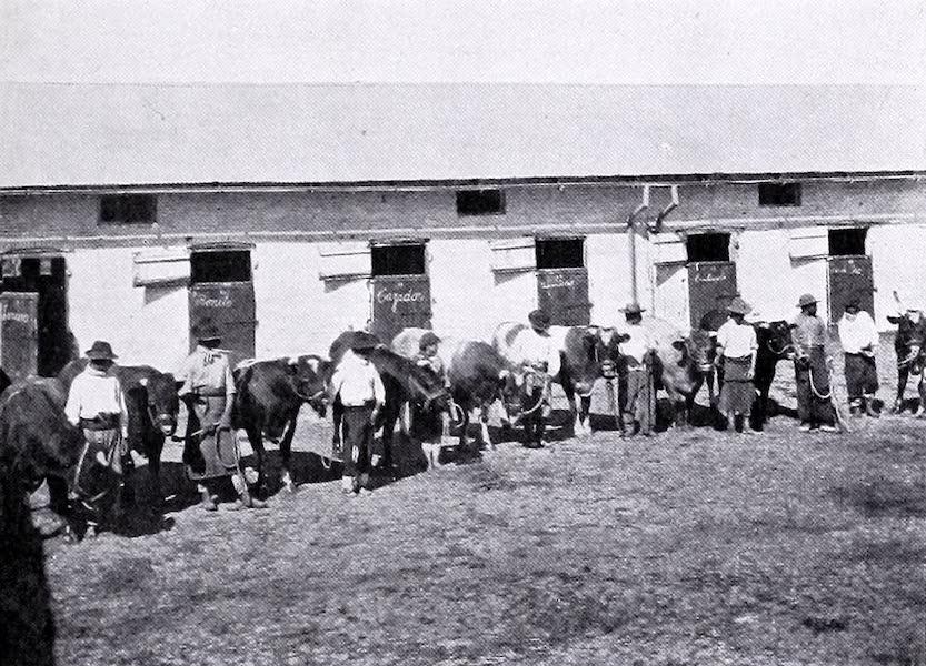 Ewes and Lambs at Las Cabezas