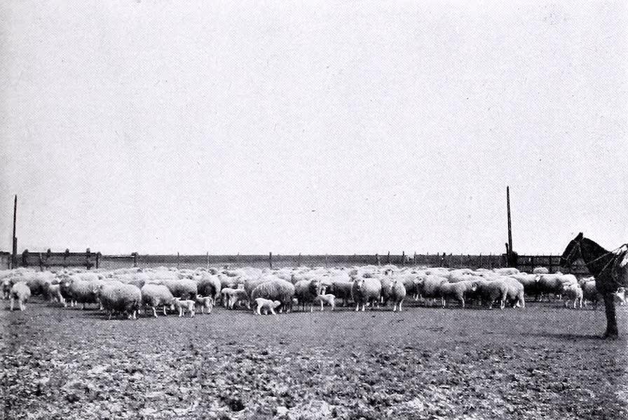 Argentina, Past and Present - Las Cabezas : The Homestead (1914)