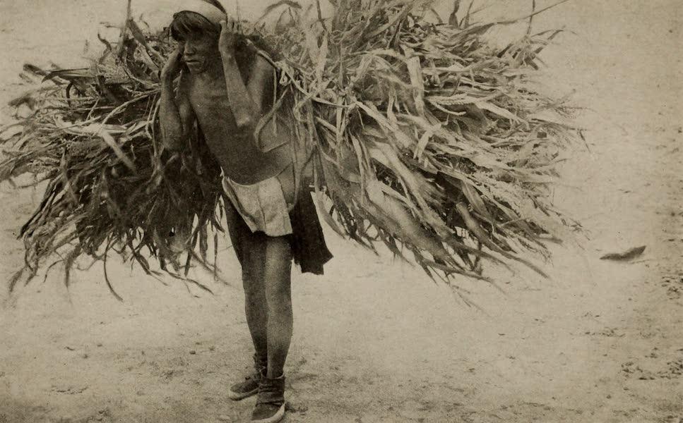 Arizona, The Wonderland - Hopi Indian with Load of Corn Fodder (1917)