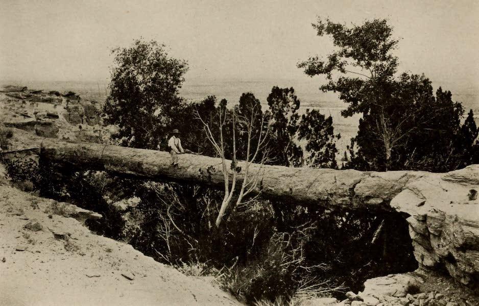 Arizona, The Wonderland - The Petrified Bridge in the Petrified Forest of Arizona (1917)