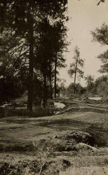 Arizona, The Wonderland - Pine Forest and Mountain Road, near Prescott, Arizona (1917)