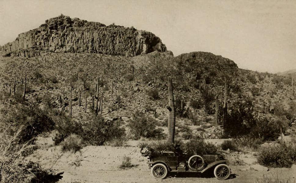 Arizona, The Wonderland - On the Borderland Highway, between Nogales and Tucson, Arizona (1917)