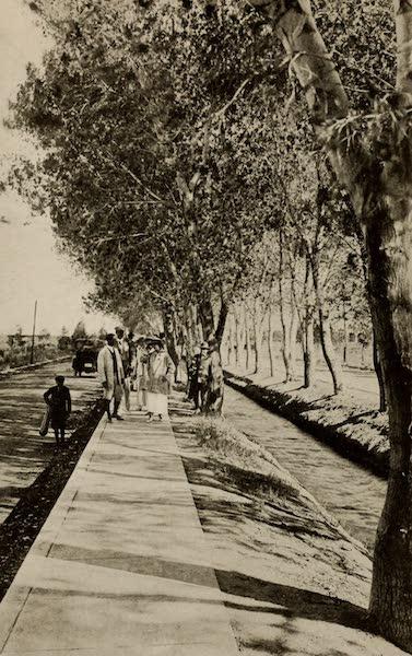 Arizona, The Wonderland - A Tree and Canal Lined Street at Chandler, Arizona (1917)