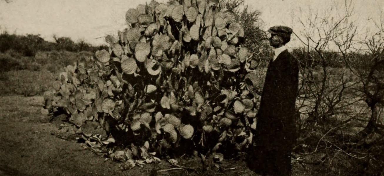 Arizona, The Wonderland -  (1917)