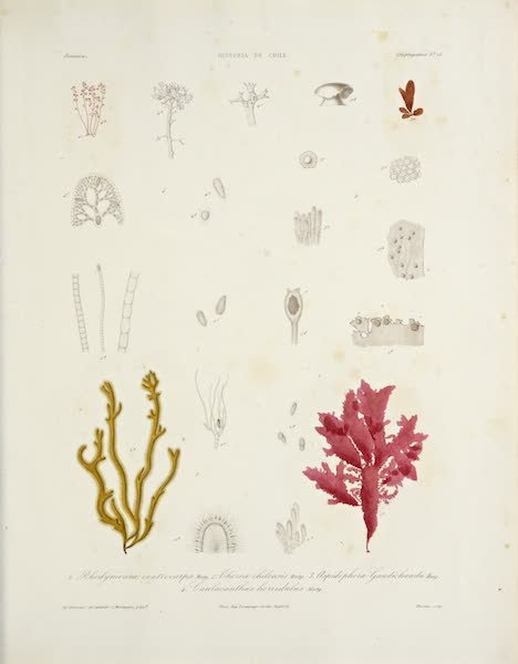 Natural History Plate