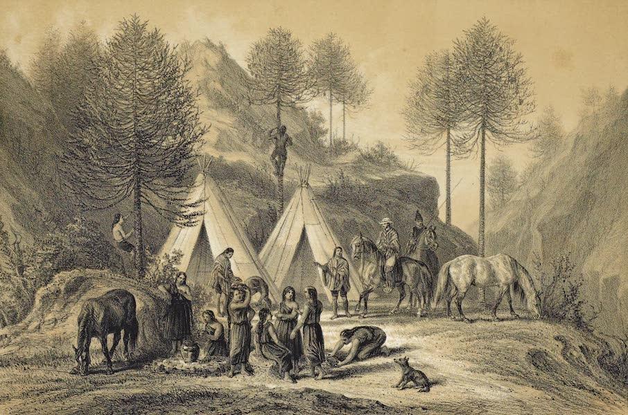 Atlas de Historia fisica y Politica de Chile Vol. 1 - Les Pinales de Nahuelbuta Nacimiento (1854)
