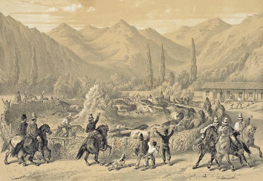 Atlas de Historia fisica y Politica de Chile Vol. 1 - Una Trilla (1854)