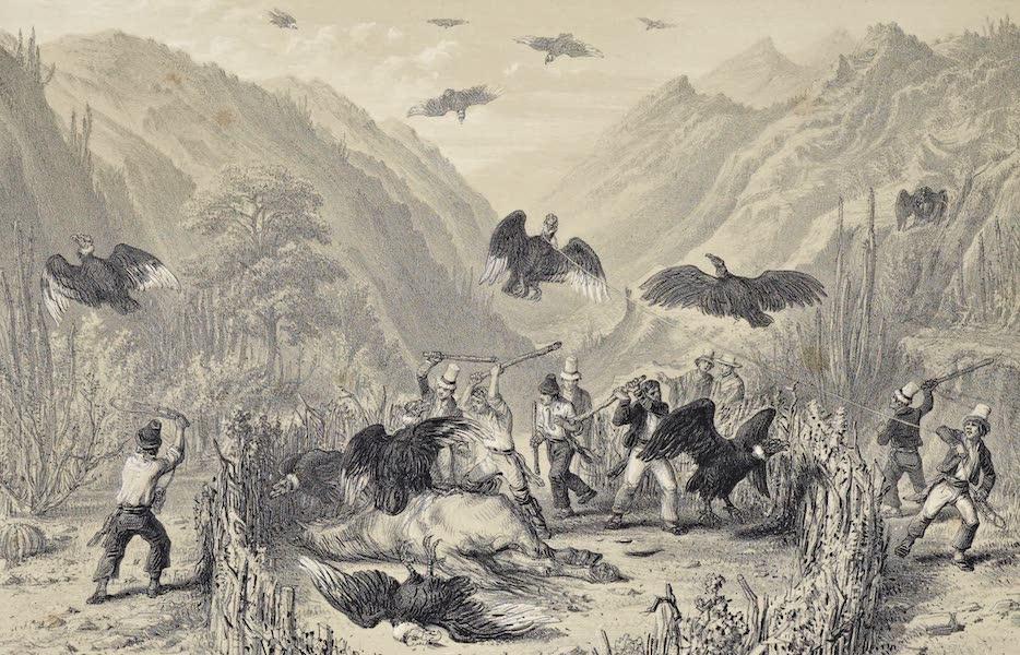Atlas de Historia fisica y Politica de Chile Vol. 1 - Caza a los Condores (1854)