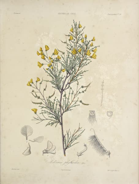 Atlas de Historia fisica y Politica de Chile Vol. 1 - Natural History Plate (1854)