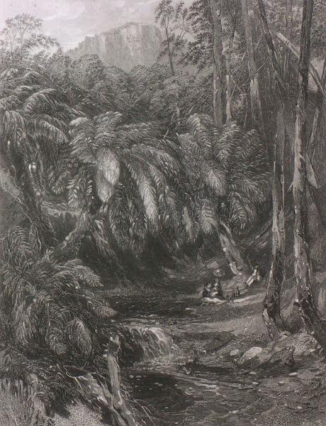 Australia Vol. 1 - A Fern-Tree Valley (1873)