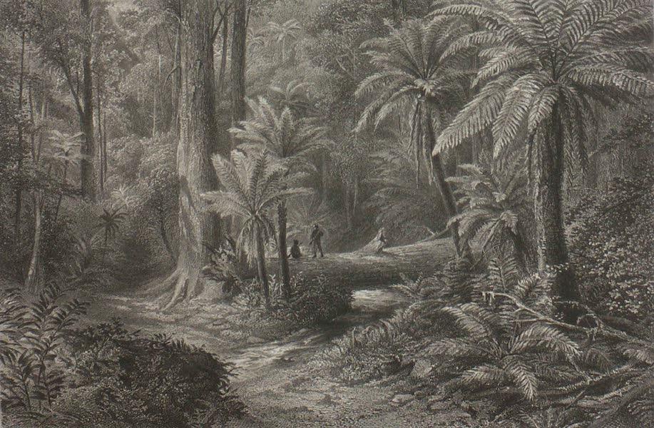 Australia Vol. 1 - Fern-Trees (1873)