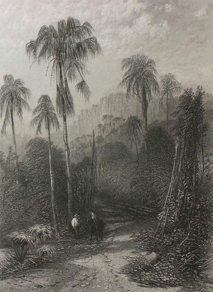 Australia Vol. 2 - Mount Kiera, New South Wales (1873)