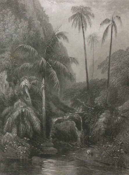 Australia Vol. 2 - Gully at Woolongong (1873)