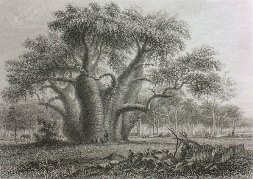 Australia Vol. 2 - The Boadab Tree (1873)