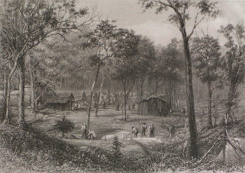 Australia Vol. 2 - New Zealand Gully near Roehampton, Queensland (1873)