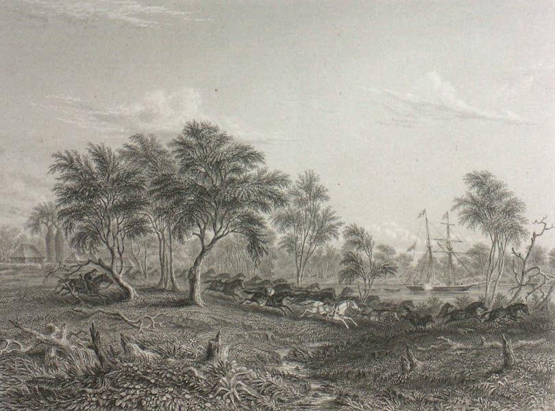 Australia Vol. 2 - Stampede of Pack Horses, Northern Territory (1873)