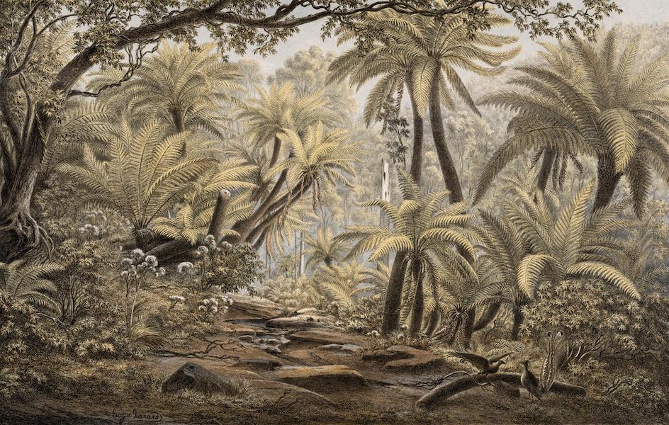 Australian Landscapes - Ferntree Gully, Dandenong Ranges, Victoria (1866)